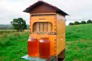 Como fazer mel (Caixas de Mel)