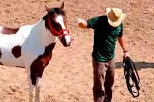 Doma de Cavalo (Doma Racional)