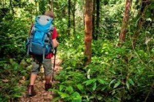 Teoria da Sobrevivência na Selva
